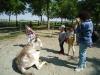 BABY ASINO DAY 2011
